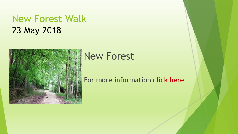 New Forest Walk